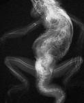 Osteodistrofia reptiles