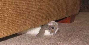 Conejo sofá